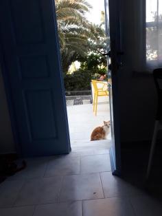 Bonjour, Monsieur le chat